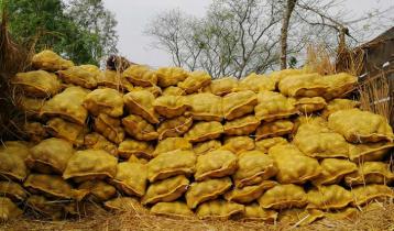 নিজেদের উৎপাদিত আলু মালয়েশিয়ায় রপ্তানি করছে বিএডিসি