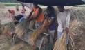 চাঁদপুরে ৬১ হাজার ২৮৫ হেক্টর বোরো আবাদ, কৃষকের উল্লাস