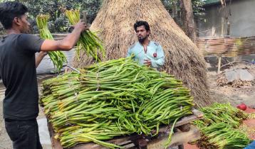 বিশ্বের ২৫ দেশে যাচ্ছে কুমিল্লার কচু ও লতি