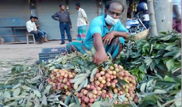 দিনাজপুরে লিচুর ফলন কম, দাম বেশি