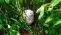 নিখোঁজের ৩ দিন পর শিশুর বস্তাবন্দি মরদেহ উদ্ধার
