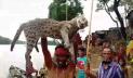 টাঙ্গুয়ার হাওরে মেছোবাঘ মেরে এলাকাবাসীর 'উল্লাস'