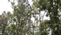 অনুমতি ছাড়াই শালবনের ভেতর দিয়ে বিদ্যুৎ লাইন স্থাপন