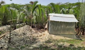 গোলগাছ কেটে বসতিঘর, হুমকিতে বন্যানিয়ন্ত্রণ বাঁধ