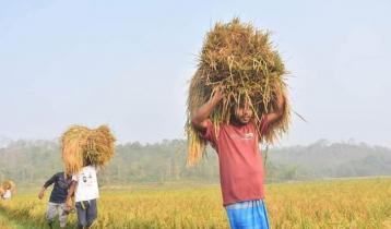 রাঙ্গুনিয়ায় ধান কেটে কৃষকের বাড়ি পৌঁছে দিচ্ছে ছাত্রলীগ