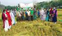 রাঙামাটিতে ধানকাটায় কৃষকের পাশে 'জীবন'