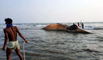 Dead whale washed up on Himchhari beach