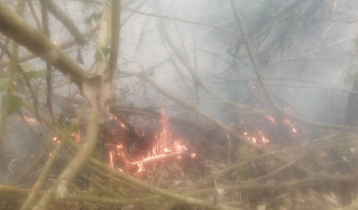 Sundarbans fire yet to be doused in 24 hours
