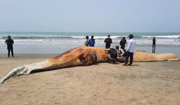 Another dead whale washes ashore on Himchhari beach