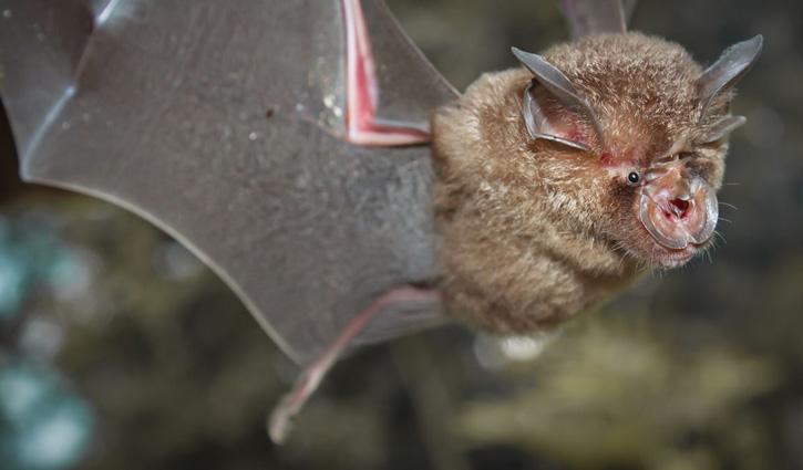 Scientists find new coronaviruses in bats