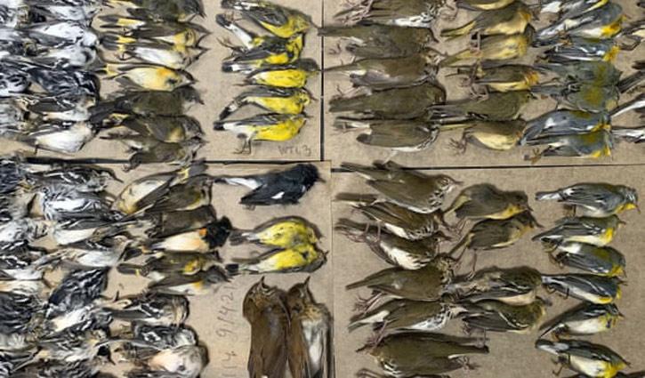 কাঁচের দেয়ালে ধাক্কা খেয়ে ৩০০ পাখির মৃত্যু