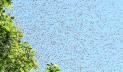কুষ্টিয়ায় লাশ দাফনের সময় ঝাঁকে ঝাঁকে মৌমাছির আক্রমণ