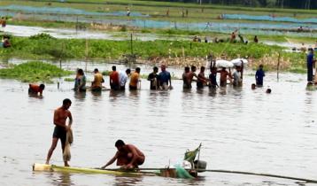 ঠাকুরগাঁওয়ে বুড়ির বাঁধে মাছধরার উৎসব