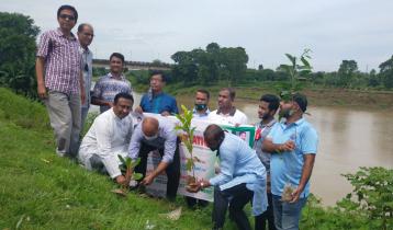 কুমিল্লায় ৬ কিলোমিটার বাঁধে বৃক্ষরোপনকর্মসূচী