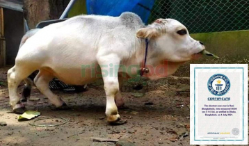 'Rani' recognized as world's smallest cow