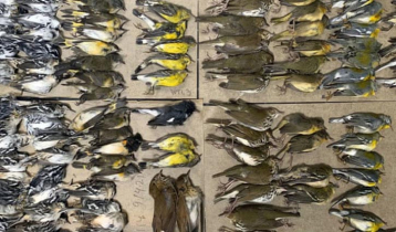300 birds die after colliding with World Trade Center Towers