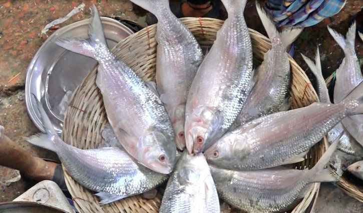 Hilsa fishing banned for 22 days from Oct 4